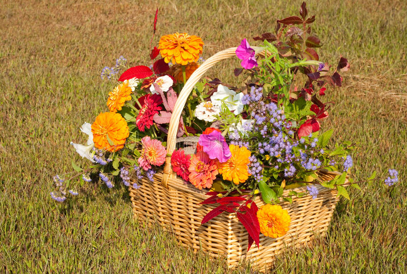Download Flowers And Foliage In Brilliant Fall Colors Stock Image - Image: 23115475