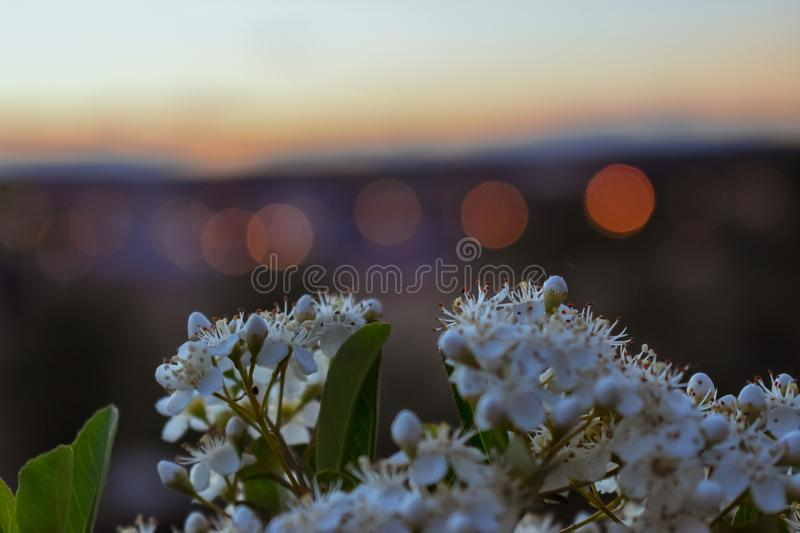 Flowers in the foreground with the city out of focus in the background stock photos
