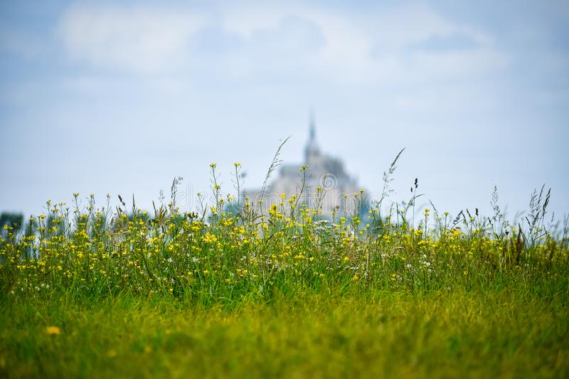 Flowers in the foreground with defocused silhouette of Mont Saint Michel, France. Copy space for text. Flowers in the foreground with defocused silhouette of royalty free stock photos