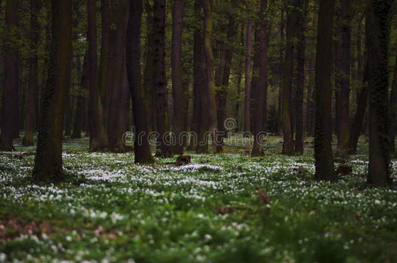 Flowers in forest royalty free stock photo
