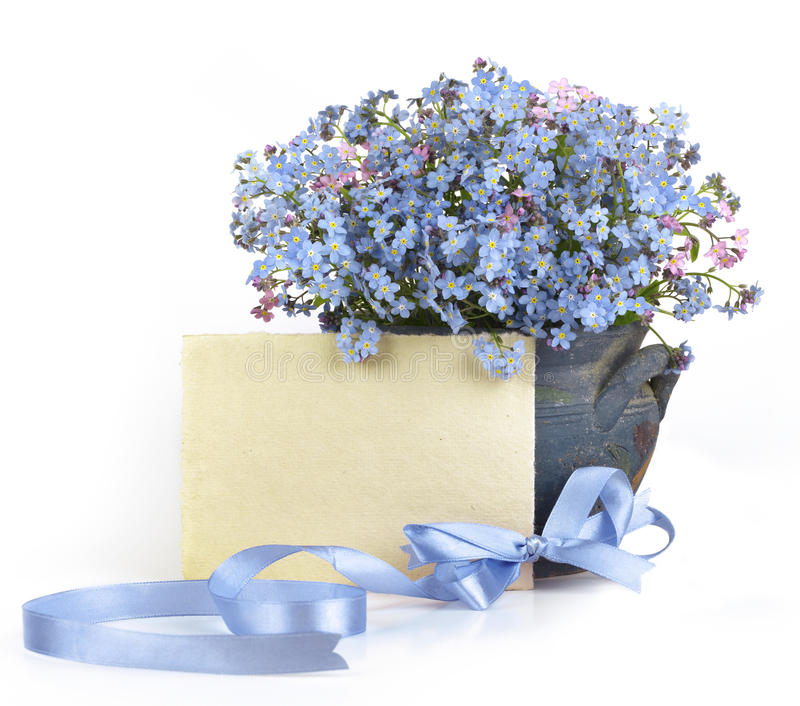 Flowers forget-me-not royalty free stock photos