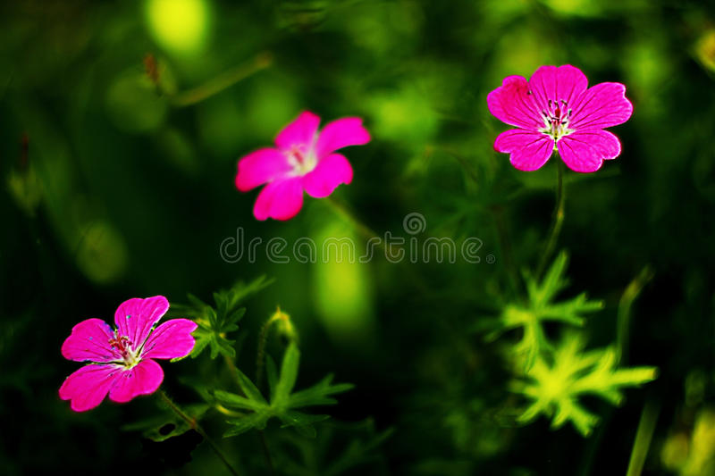 Flowers foto. Which show amazing view of our nature royalty free stock photography