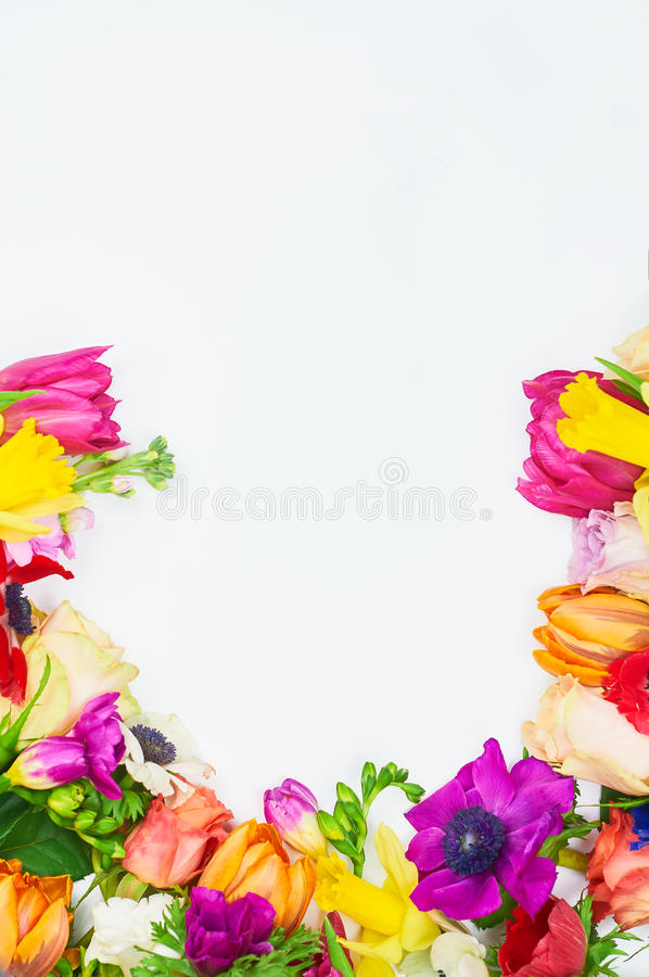 Flowers frame in white background isolated royalty free stock images