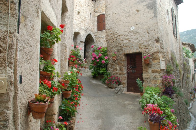 Flowers in France (St Guilhem) royalty free stock image