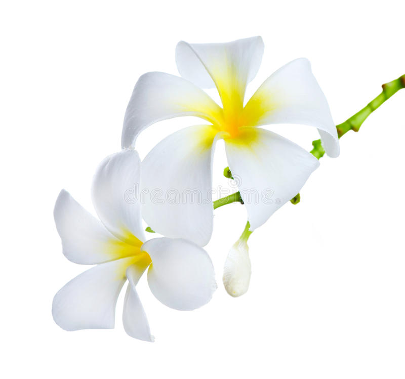 flowers frangipani spa στοκ εικόνα με δικαίωμα ελεύθερης χρήσης