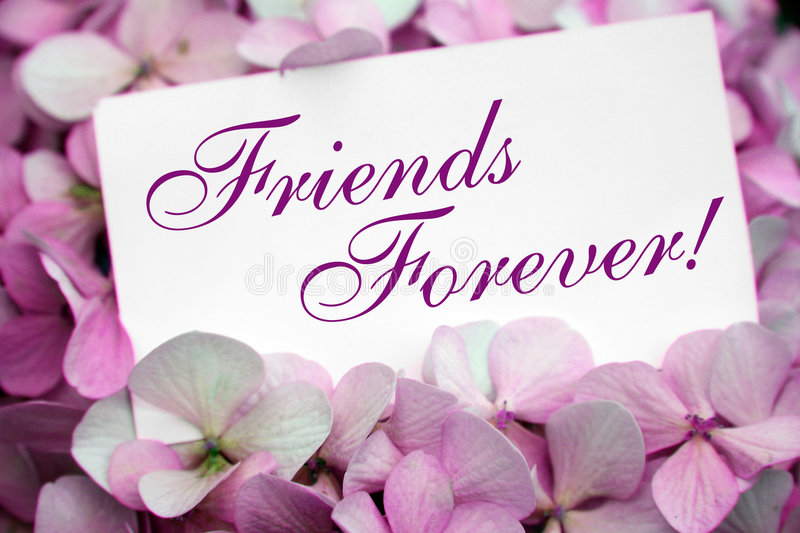 Flowers with friendship card. Pink flowers with friendship card stock photos