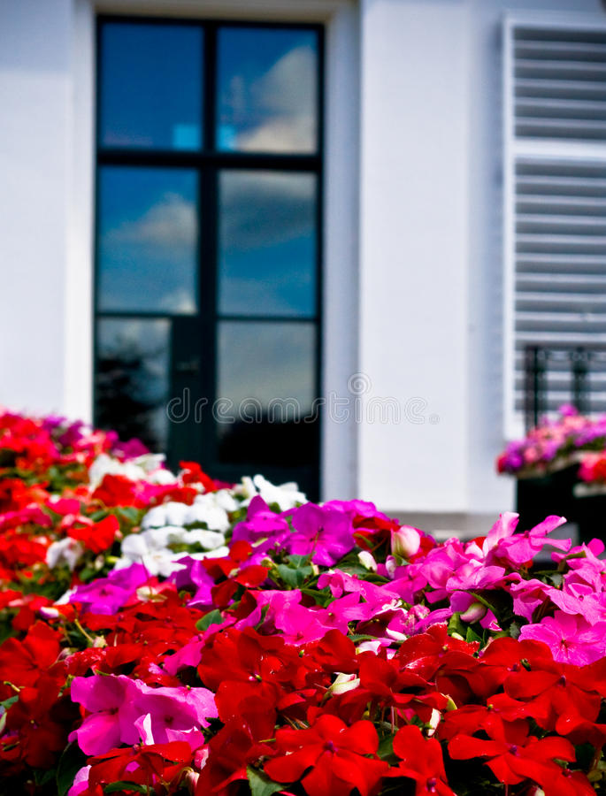 Flowers In Front Of Window Stock Photo