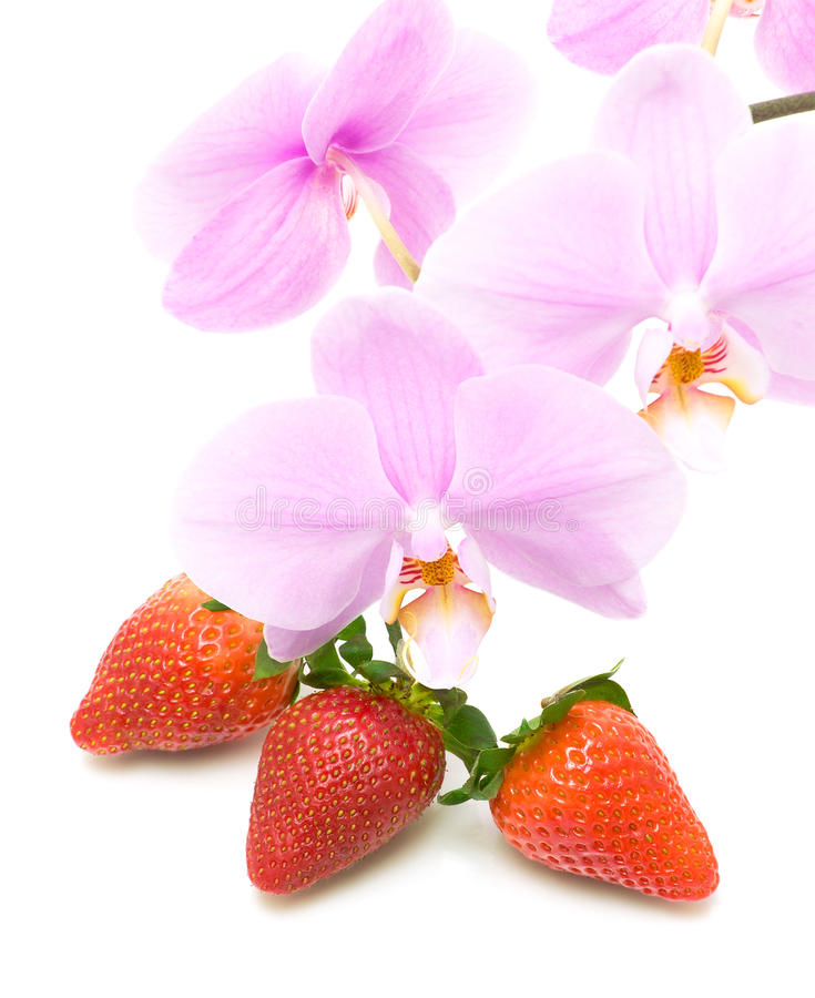 Strawberries and a branch blooming orchid close-up on white back stock photos