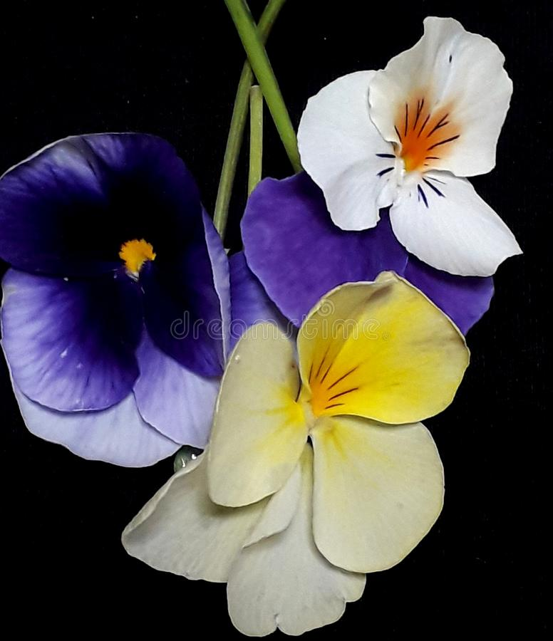 Mixed violet flowers royalty free stock photos