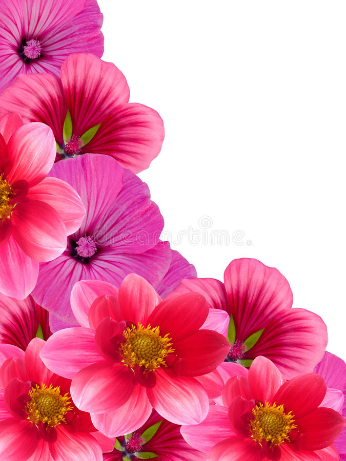 Download Flowers from a garden stock image. Image of petals, summer - 12792313
