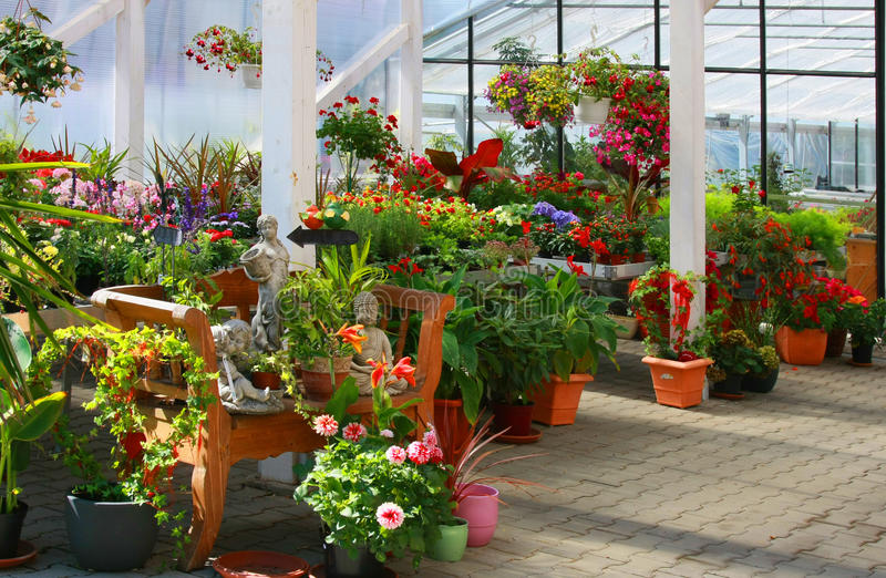 Download Flowers in the garden. stock image. Image of nice, front - 20854875