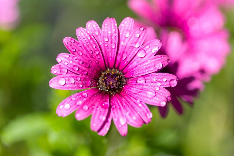 Download Flowers in garden stock image. Image of floral, background - 109450375