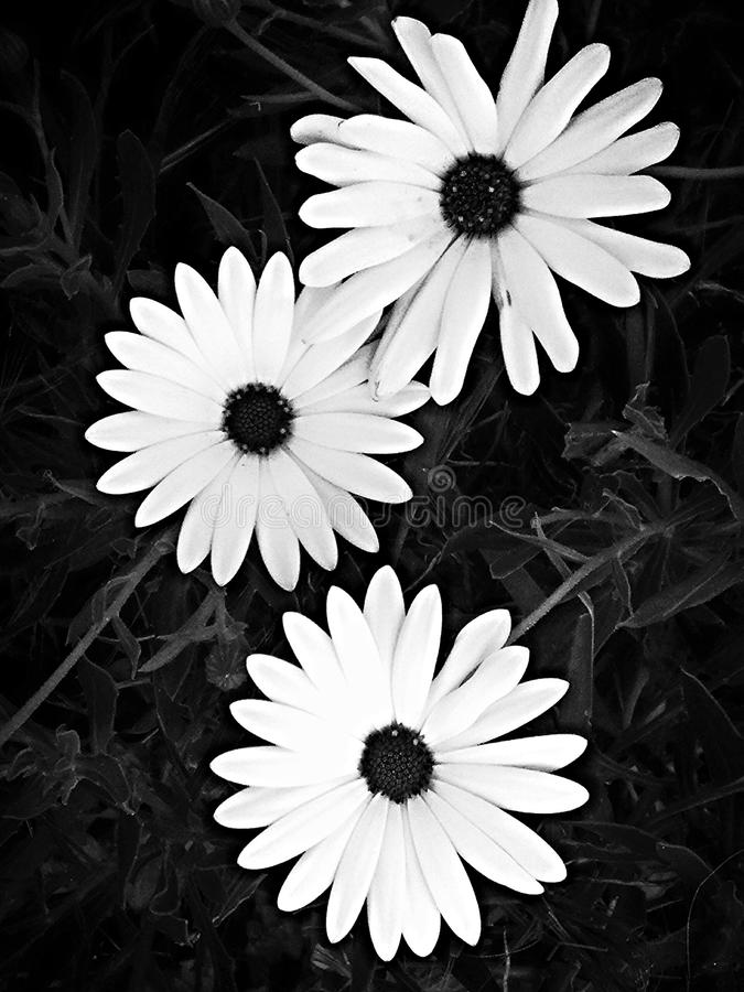 Flowers in the garden stock photography