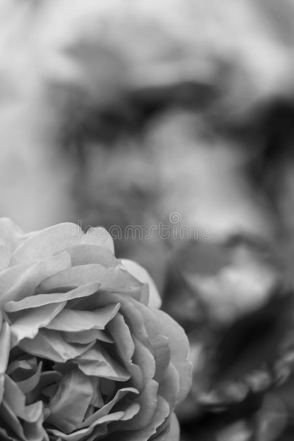 Flowers in the garden by day. Black and white poster stock photo