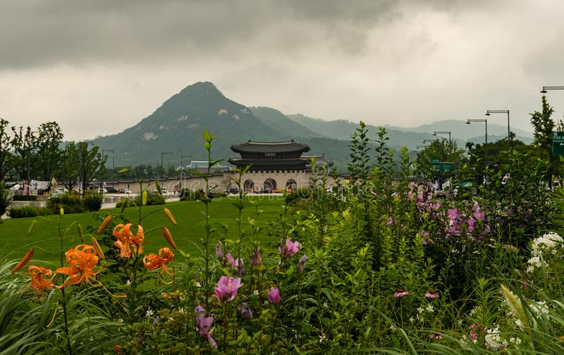 Flowers in the garden in front of entrance to Gyeongbokgung royalty free stock image