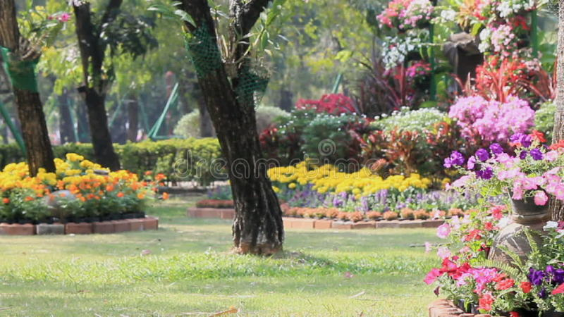 Flowers In The Garden, HD Vdo. Stock Video   Video Of Landscape, Floral:  73673753