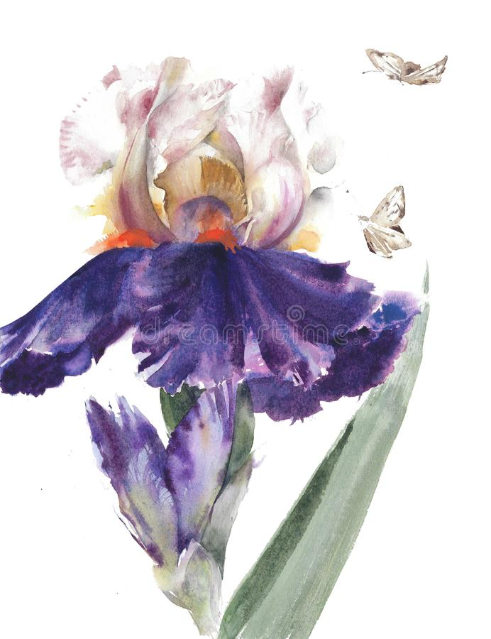 Flowers garden irises beautiful spring blossom watercolor painting illustration isolated on white background stock illustration
