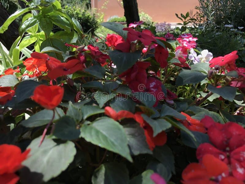 Flowers in garden stock image
