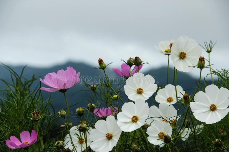 Flowers Garden on mountain stock photo