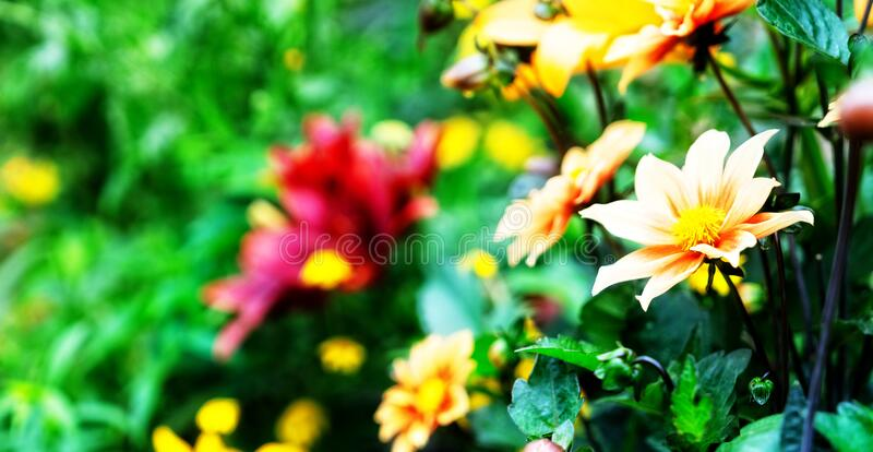 Flowers in garden royalty free stock photo