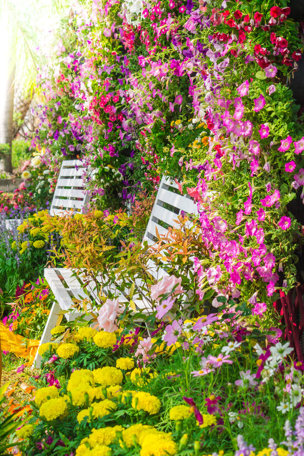 Flowers in the garden. White wooden chair in the flowers garden on summer stock image