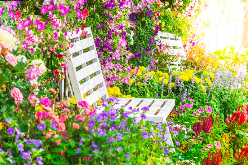 Flowers in the garden. White wooden chair in the flowers garden on summer with sun flare royalty free stock photos