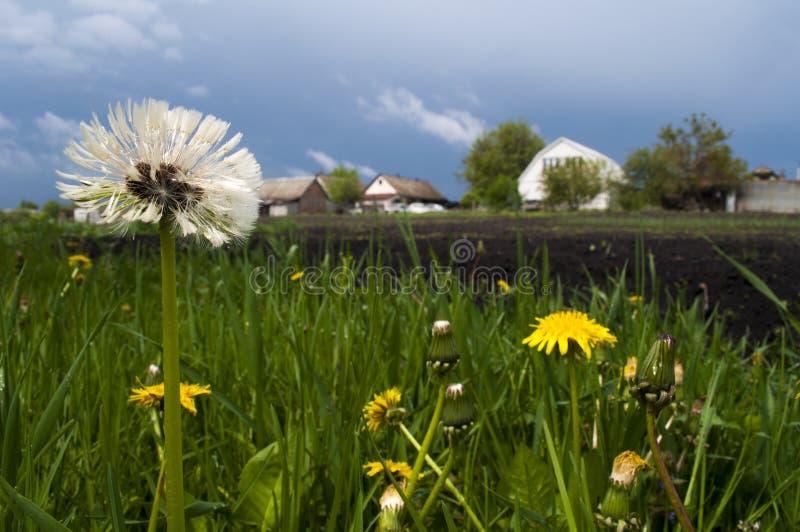 Flowers in the garden. stock image