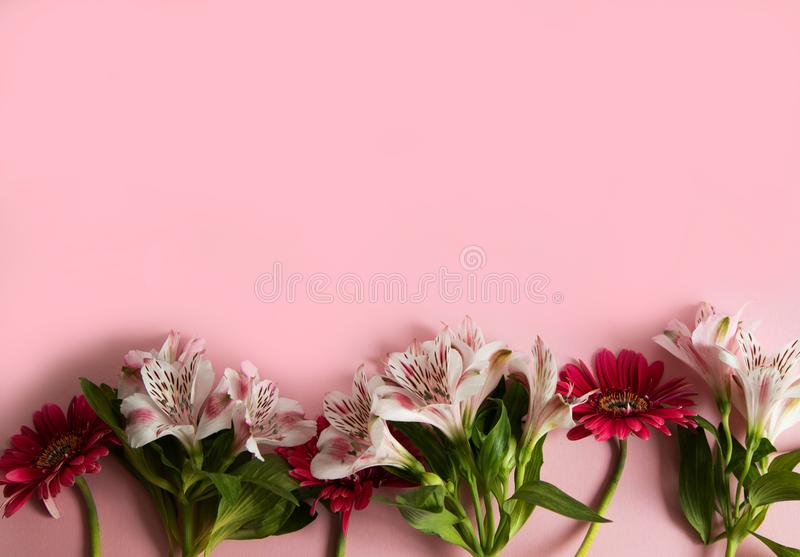 Flowers of gerbera and alstroemeria laid out in a row on a pink background. Three red and three pink flowers on a pink background royalty free stock image