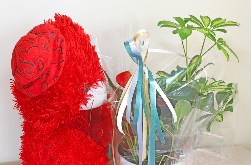 Flowers in a gift wrap. Red teddy bear behind royalty free stock photo