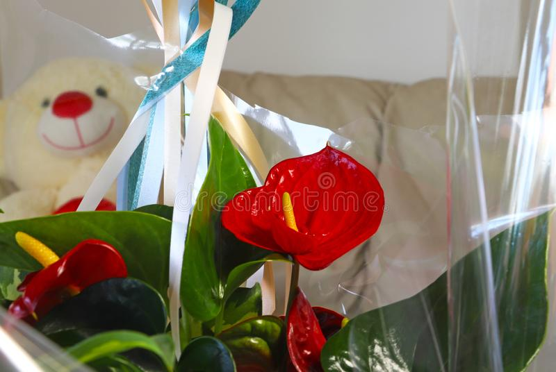 Flowers in a gift wrap. Teddy bear behind royalty free stock images