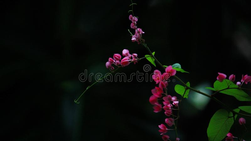 The color of the flowers is watching with the dark background. royalty free stock photo