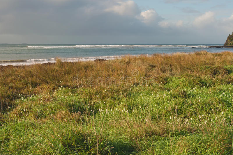Flowers And Grass On Beach Stock Image
