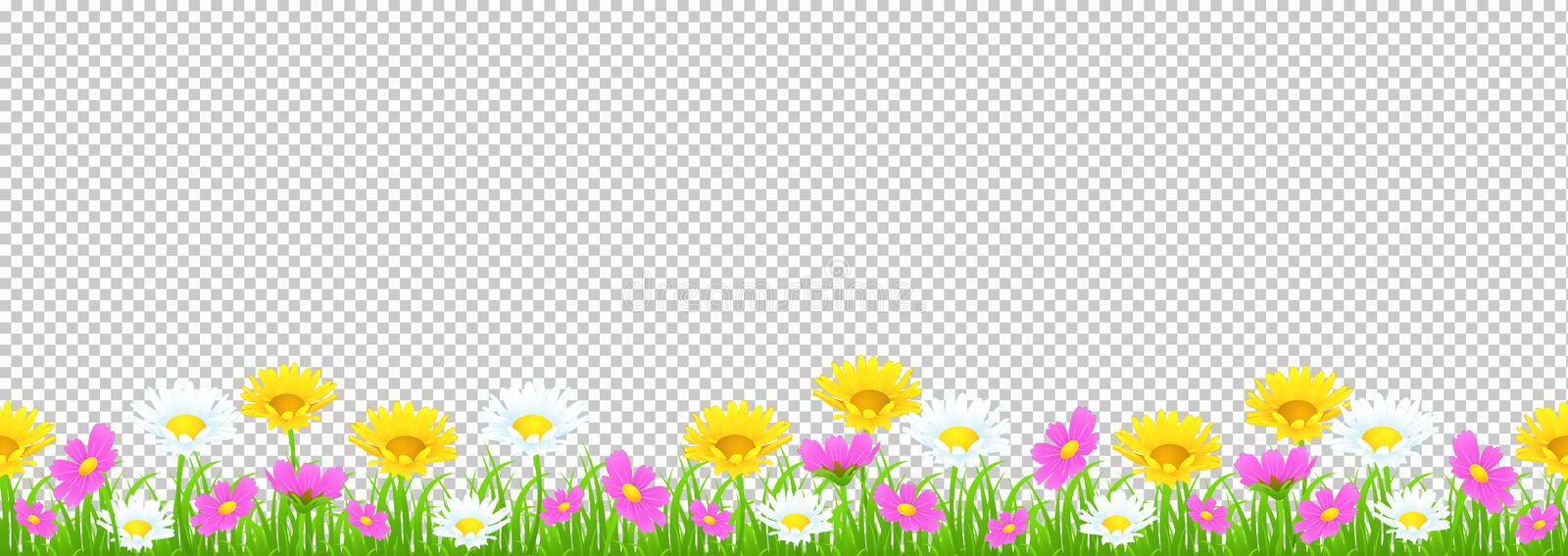 Flowers and grass border, yellow and white chamomile and delicate pink meadow flowers and green grass on transparent background, v. Ector illustration, greeting royalty free illustration