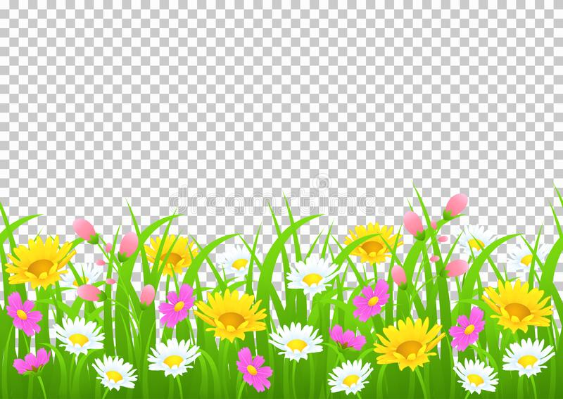 Flowers and grass border, yellow and white chamomile and delicate pink meadow flowers and green grass on transparent. Background, vector illustration, greeting stock illustration