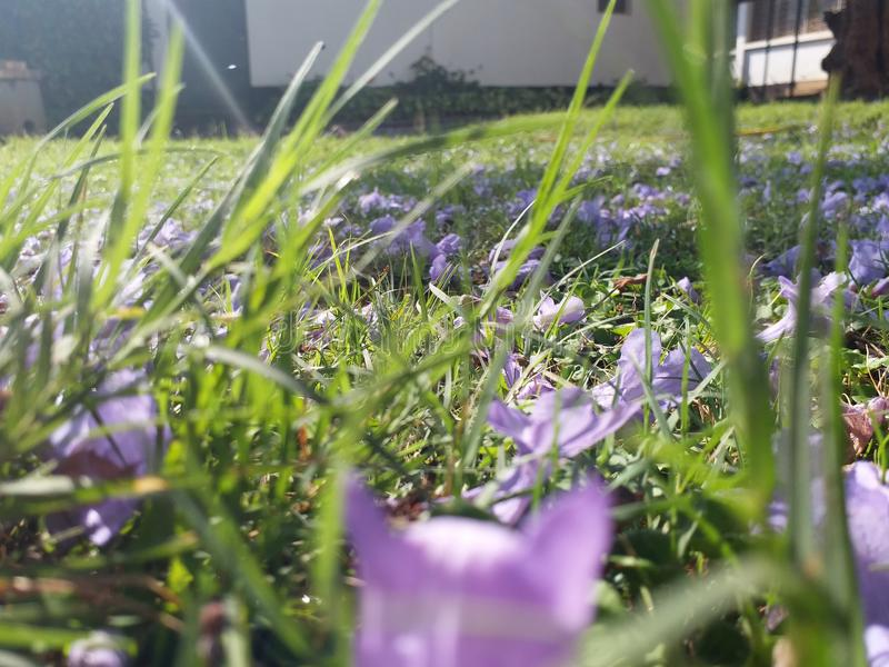 Flowers on grass stock images