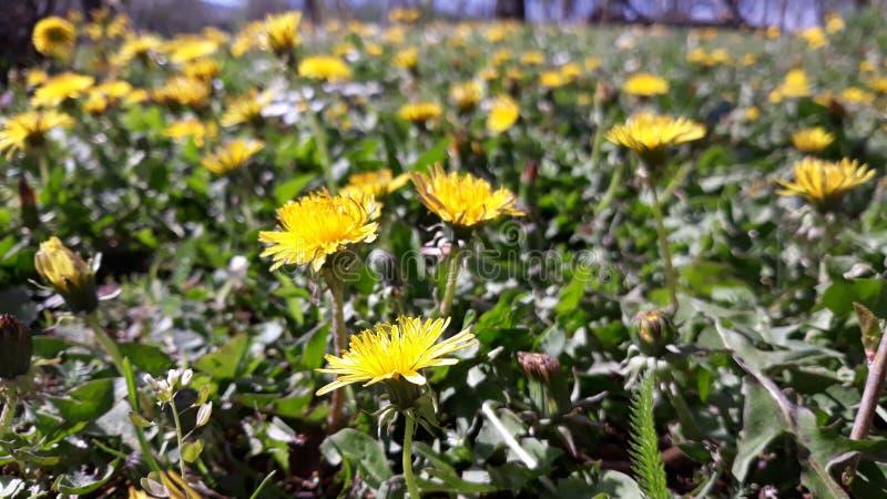 Flowers on grass stock photos
