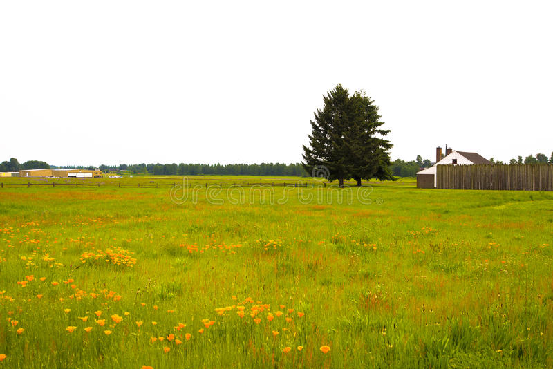 Download Flowers And Grass And Tree On Colorfu Summer Meadow Stock Photo - Image: 40959360