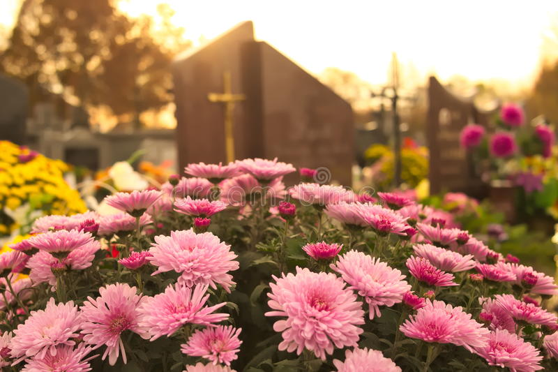 Flowers on a grave at cemetery. In warm light. Tombstone in the background royalty free stock photo