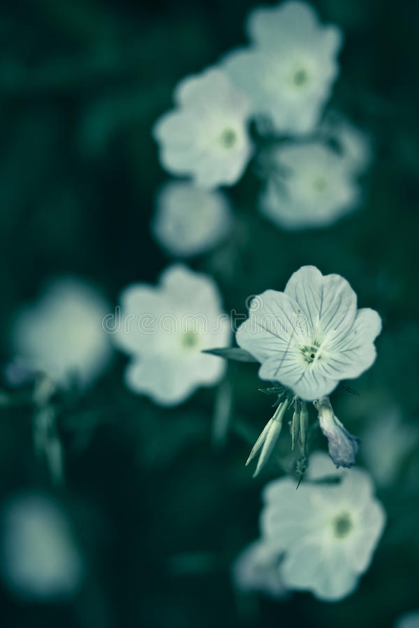Flowers On A Green Background Stock Photos