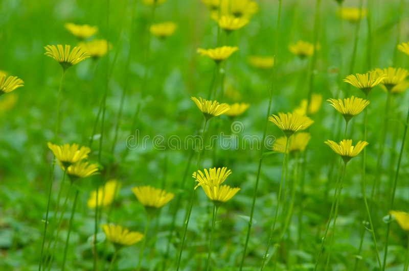Flowers in the green field royalty free stock image