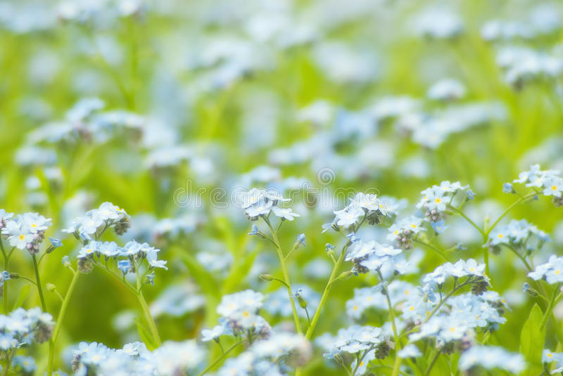 Flowers on green field. A bunch of flowers on a green field royalty free stock image