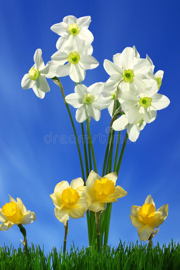 Flowers and green grass stock images