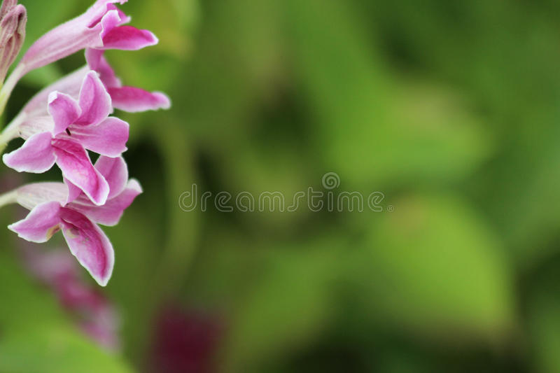 Flowers and green leaves blurred background royalty free stock image