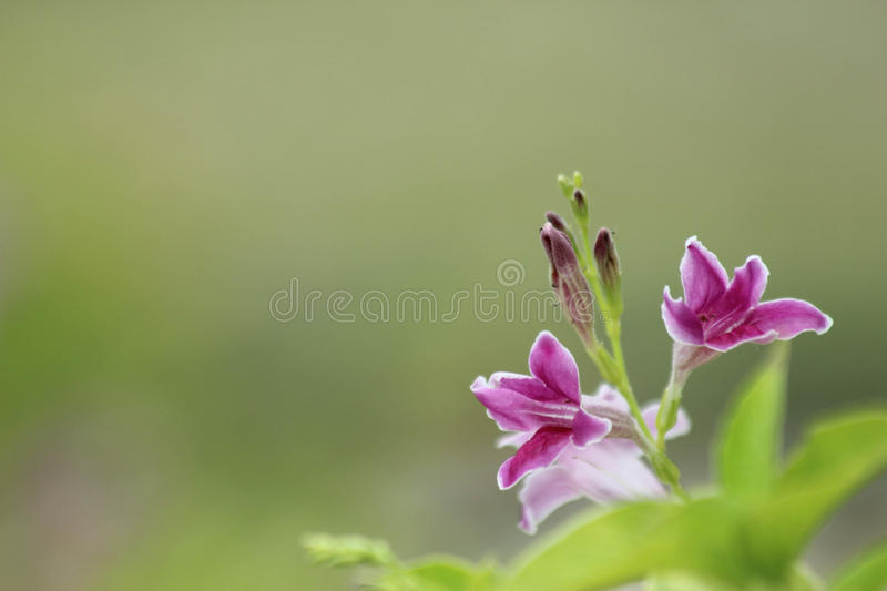 Flowers and green leaves blurred background royalty free stock photos