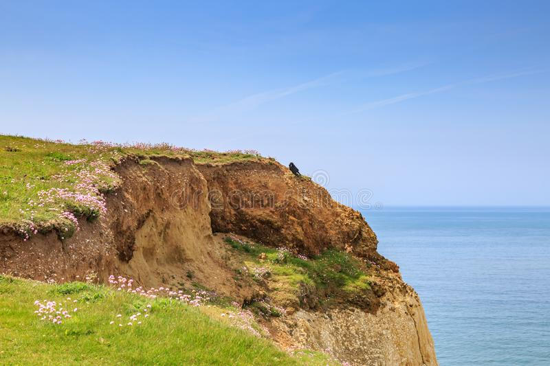 A Cliff Edge. Flowers growing on a cliff edge at Seaford in Sussex royalty free stock photos