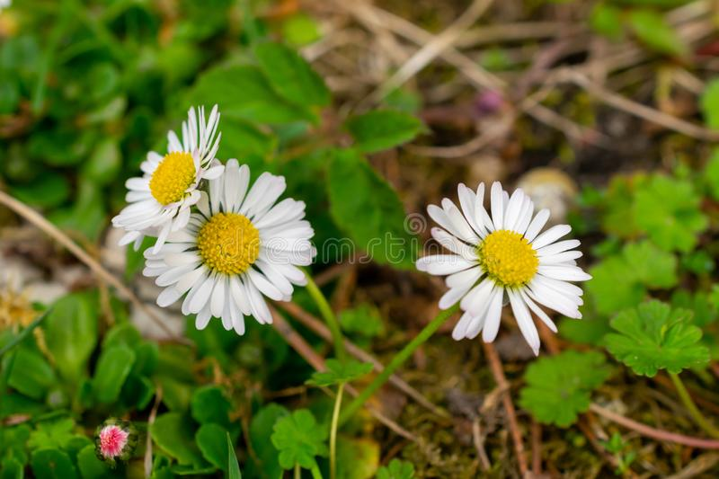 Flowers growing on grassy field stock images