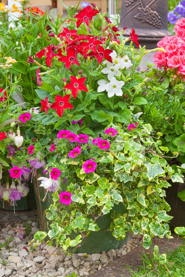 Flowers growng in containers. Colorful potted plants in a urban garden setting royalty free stock images