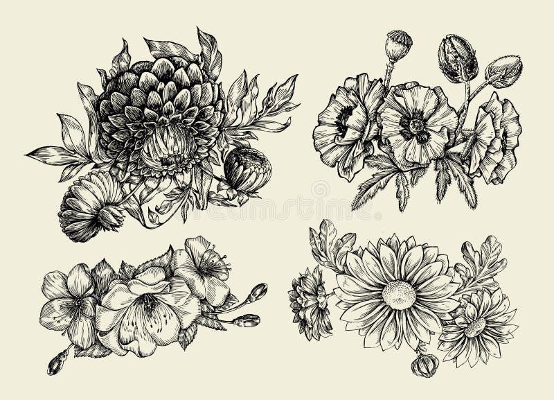 Flowers. Hand drawn sketch flower, poppy, chrysanthemum, dahlia. Vector illustration royalty free illustration