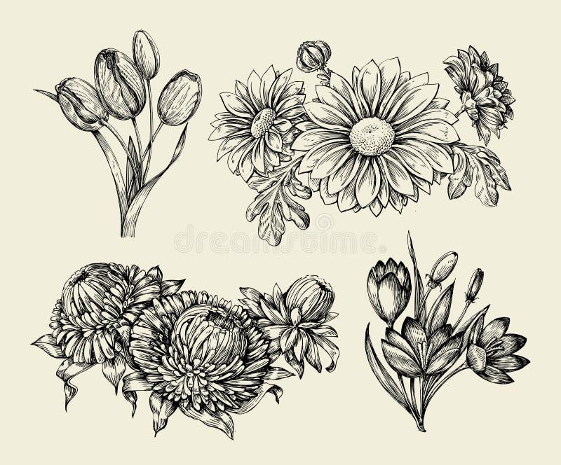 Flowers. Hand drawn sketch flower, tulip, astra, aster, crocus, chrysanthemum. Vector illustration. Flowers. Hand-drawn sketch flower, tulip, astra, aster crocus stock illustration