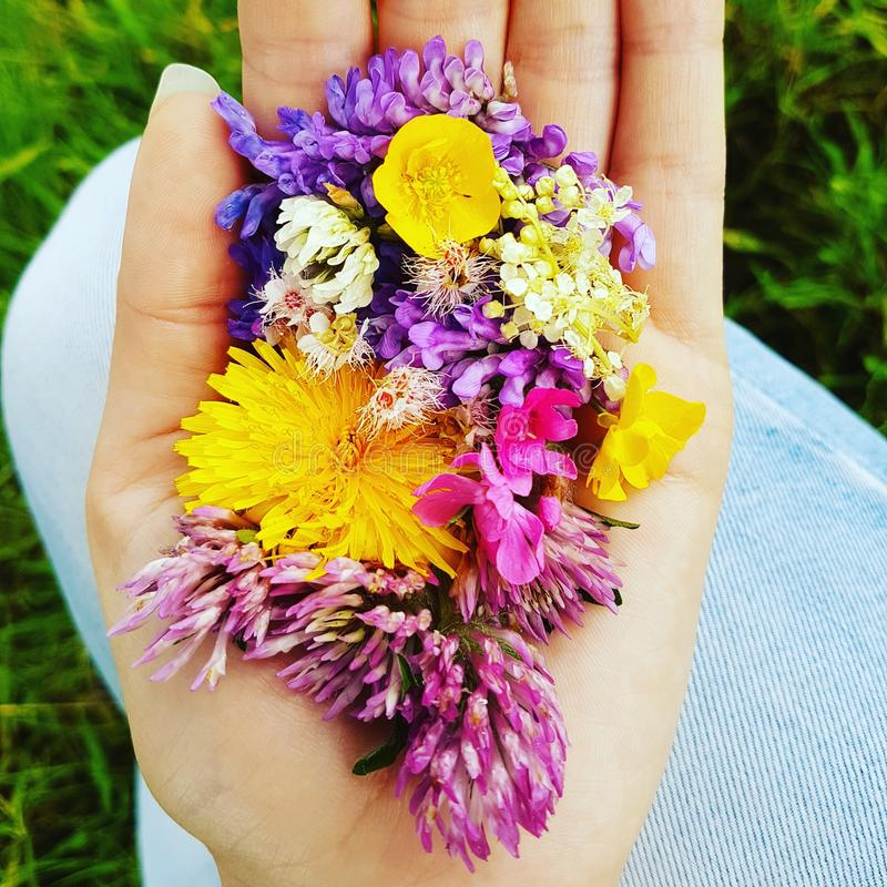 Flowers in hand stock photography